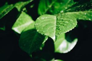 foto del primo piano delle foglie