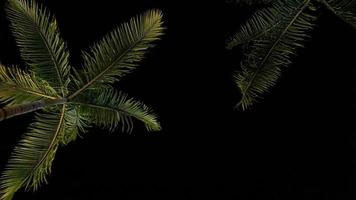 albero di cocco di notte foto