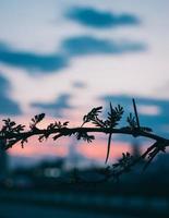 ramo di un albero all'alba