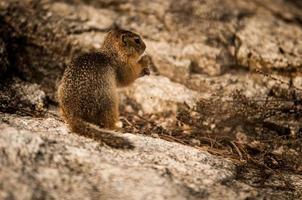 scoiattolo con dado