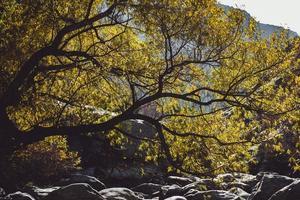 fotografia naturalistica di rocce sotto l'albero verde