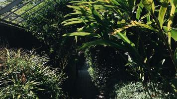 interno di un giardino botanico
