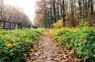 sentiero in una foresta