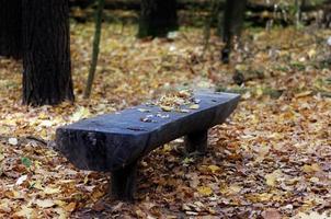 panca in legno in una foresta