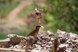due uccelli durante il giorno foto