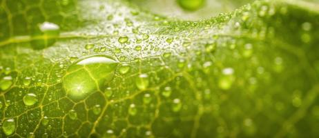 gocce di pioggia su una foglia foto