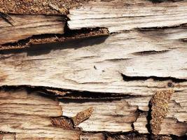 modello di legno astratto foto