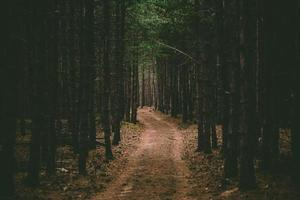 percorso in una foresta foto