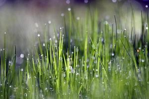 pioggia che cade sull'erba verde foto