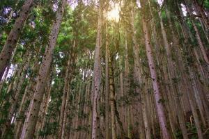 pino a valle dell'inferno jigokudani in giappone foto