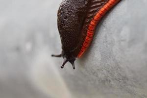 primo piano di una lumaca