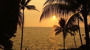 sagome di palma al tramonto
