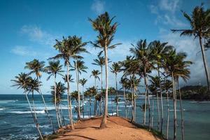albero di cocco collina nello sri lanka