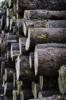 primo piano di tronchi di fuoco