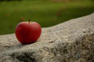 primo piano di una mela rossa