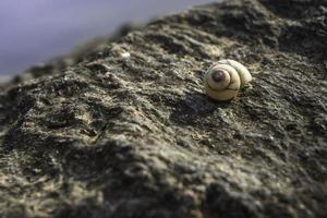 lumaca su una roccia