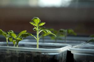 germinazione di foglie di piante