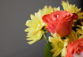 primo piano di fiori rossi e gialli foto