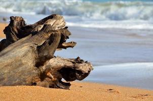 legni sulla spiaggia
