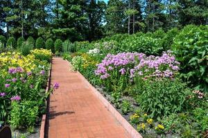 fiori lungo un sentiero foto