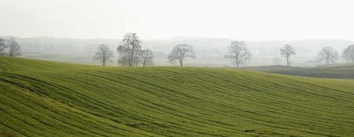 nebbiosa collina verde con alberi