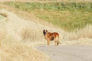 cane sul sentiero escursionistico foto