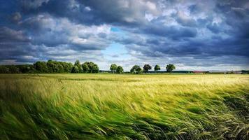 campo con grano