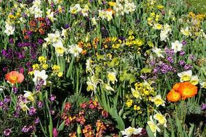 fiori nel parco foto