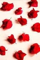 fiori rossi a petali