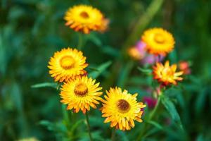 primo piano di fiori gialli