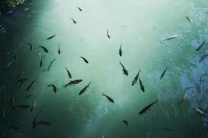 pesci che nuotano nell'acqua