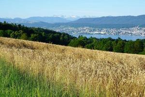 paesaggio in zollikon in estate foto