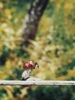 coccinella su un albero