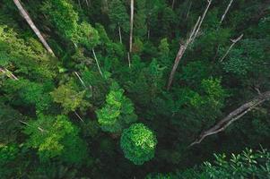 sfondo foresta tropicale, scena naturale con alberi a baldacchino