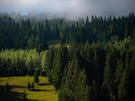 foresta verde nebbiosa