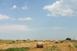 balle di fieno in un campo