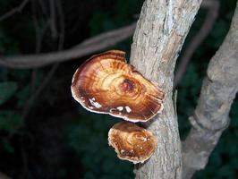 fungo selvatico su un ramo