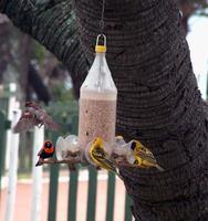 diversi uccelli in una mangiatoia