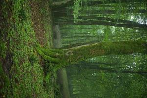 un vecchio albero coperto di muschio