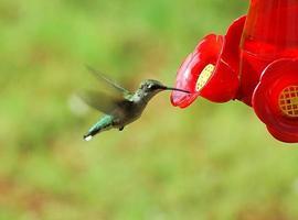 colibrì in una mangiatoia