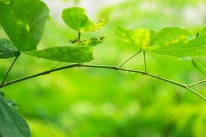 rugiada sulle foglie nella stagione delle piogge