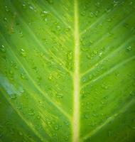 goccia d'acqua sulle foglie verdi
