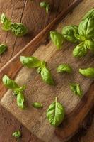 basilico verde biologico crudo foto