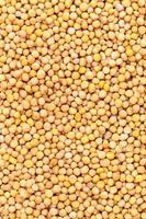 semi di senape gialla foto