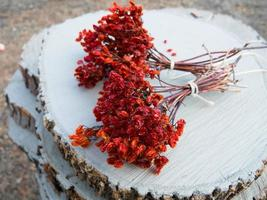 due mazzi di bacche di viburno su legno verniciato bianco bianco foto