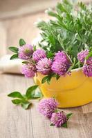 erbe aromatiche -sagebrush e trifoglio foto