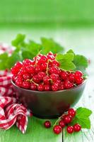 ribes rosso foto