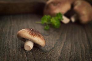 funghi shiitake foto