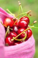 tasca rosa piena di ciliegie mature. immagine del primo piano all'aperto di estate.