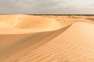Deserto del Sahara foto